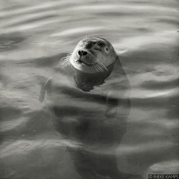 Content Bobbing (seal)