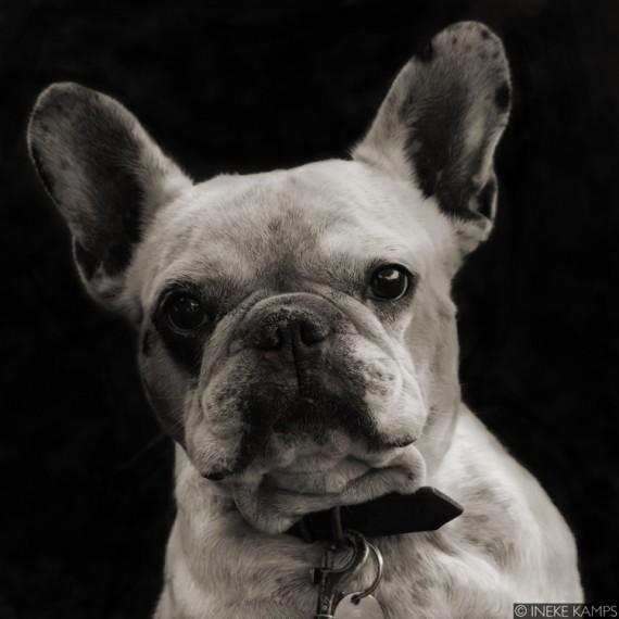 Here Doggie